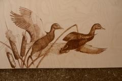 Black-Ducks-landing