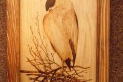 Crowned-Night-Heron