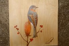 North American Bluebird #2