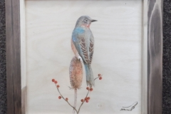 North American Bluebird