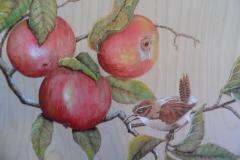 Chikadee and apples