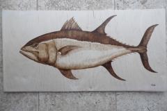 blue-fin-tuna